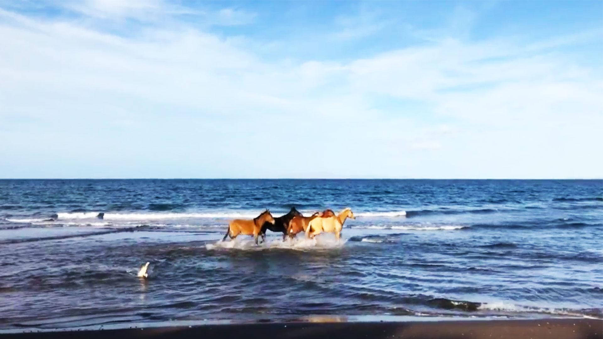 Pferde am Strand in Baja California
