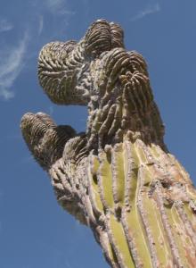 Blogartikel über Ausreiten in Baja California. © Nina Fabienne Scholz