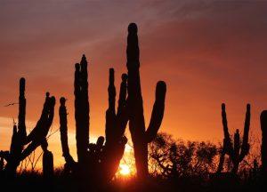 Kakteen im Sonnenuntergang © Nina Fabienne Scholz