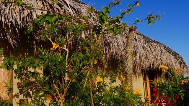 Blogartikel über das Arbeiten auf einer Eco-Ranch in Baja California. © Nina Fabienne Scholz