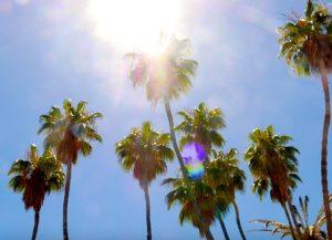 Oase Baja California ©Nina Fabienne Scholz